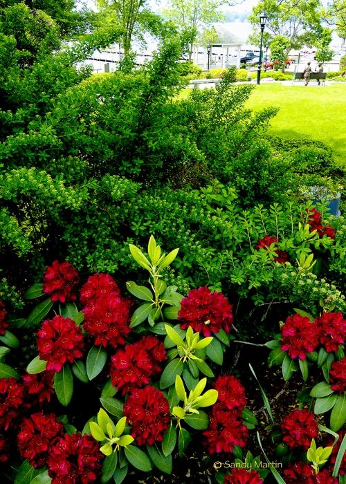 Cate Park Flowers